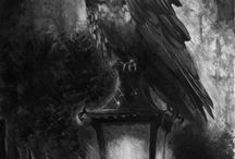 Crows, Ravens ....
