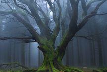 TREE'S / by Tara Swan-Harrell