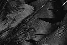 feathers etc