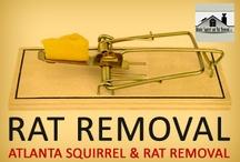 Rat Removal / by Atlanta Squirrel & Rat Removal