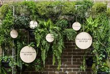 Architecture - plants