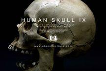 References Skulls and Bones