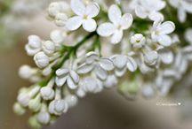 Toukokuun 2014 kuvia ja kukkia