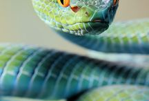 SNAKES/REPTILES / by Michaela Tanel