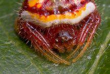 зачарованный мир насекомых