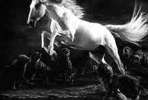 Canlar / Atlar candır..