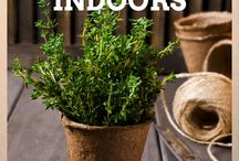 Herbs to grow indoors