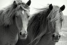 Horses / Images of beautiful horses
