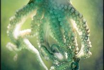under the sea / by Sheila Eibes