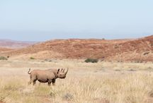 Namibia Safaris / Super images from safaris in Namibia. Nativeescapes.com