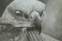 My pencil drawings
