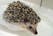 *Hedgehog* / by Jessica Perez