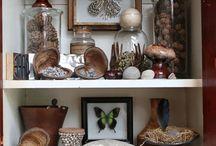 Cabinet of Curiosities