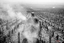 Le travail dans la vignes en Bourgogne