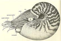art shells