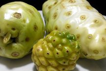 Noni, Gods fruit, bad smell fruit with best top health benefits.