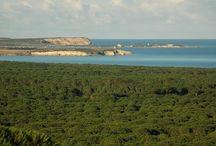 Per le Vacanze / Campeggio Nurapolis, aperto tutto l'anno. Sulla spiaggia di Is Arenas immerso in una fitta pineta in riva al mare. Ristorante, Pizzeria, Bar. Roulotte in affitto e tanto altro...