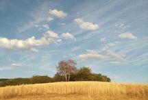 Nature-my photos