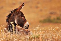 Konit (Horses)