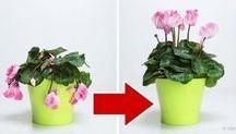 ανανέωση φυτων