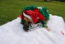 Merry Xmas / My doggy Sheba being ever so festive