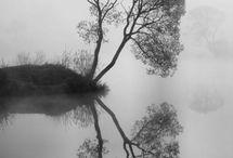 Fog & Forrest