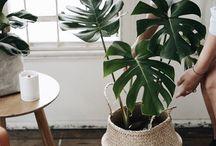 Plants MARCI