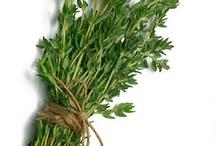 Thyme Herb Health Benefits