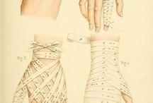 ***Planches Médecine & Anatomie***