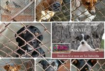 HELP US MAKE A DIFFERENCE / Donate to Pets Haven and help us continue in saving animals lives