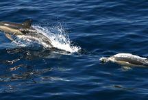 ANIMALS   AEGΕΑΝ    SEA / ANIMALS ISLANDS
