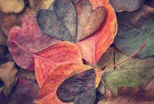 Otoño :D / Imagenes hermosas sobre el otoño.