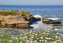 California Dreams / by Turista Profissional