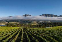 Best of South Africa's Hemel-en-Aarde wine region