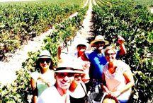 Vive la Ruta / Descubre la Ruta y vive experiencias únicas en la Ruta del Vino y el Brandy del Marco de Jerez