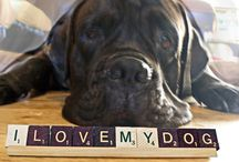 I Love My Dog! / by Sarah Willey