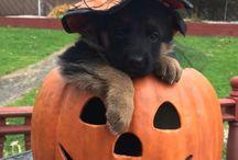 Spooky Pets