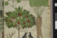 Herbalife manuscript