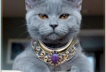 Cats Are Divine / Love of Cats - The Divine, Adorable, Cute (and sometimes so funny)