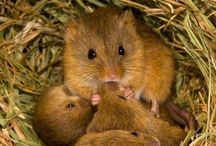 Little Mammals