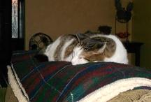 Sweet Buddah Boo Kitty