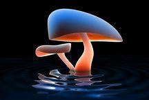 Mushrooms :D