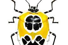 gorgeous bugs