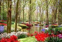 gardens / by Bernadine Tembreull