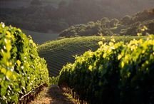 California Wine Country / Resources, guides and sight-seeing ideas for our next adventure