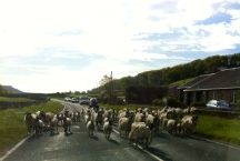 go... (to the Yorkshire Dales)