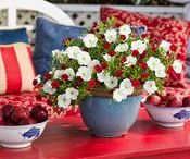 Container Garden Ideas 4th of July