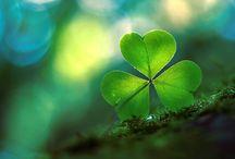Shamrocks … Luck / by Katrinchen
