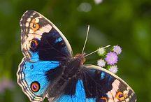 farfalle farfalle
