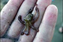 Octopus: My Childhood Teddy Bear